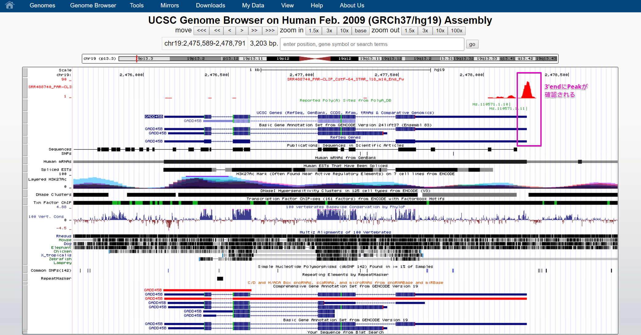 Human chr19_2475589-2478791 - UCSC Genome Browser v343 - Google Chrome 2017-01-18 17.17.50.png (629.1 kB)