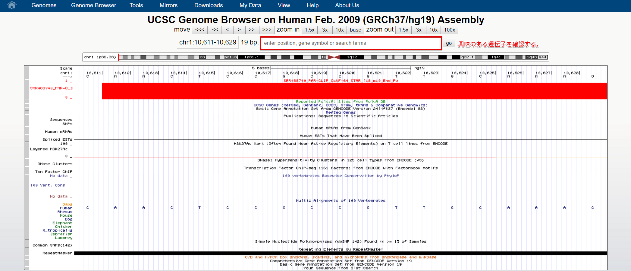 Human chr1_10611-10629 - UCSC Genome Browser v343 - Google Chrome 2017-01-18 17.16.46.png (312.5 kB)
